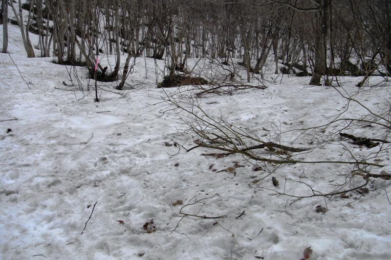2011年岩木山春スキー 154