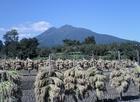 収穫と岩木山