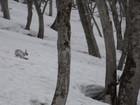 2011年岩木山春スキー 30