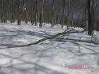 2011年岩木山春スキー 89
