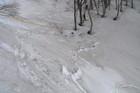 2011年岩木山春スキー 126