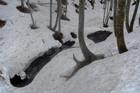 2011年岩木山春スキー 146