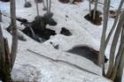 2011年岩木山春スキー 147
